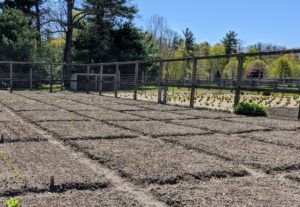 When it comes to creating and maintaining a healthy garden, proper soil preparation is crucial. Several weeks ago, the area was tilled and amended with nutrient-rich compost. Just like we did last year, we built raised, well-aerated smaller beds on one side instead of just long rows. This makes better use of the space and allows us to plant more.