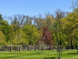 When I first moved to my farm, it was a blank slate. Over the years, I've planted thousands and thousands of trees. I love the layers of colorful foliage that one can see from a distance. This view is from my orchard looking at the surrounding trees in beautiful spring colors.