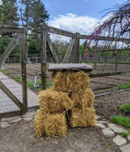 I am always thinking of new ways to improve the appearance and function of my gardens. This year, I decided to change the main pathway in my vegetable garden slightly by adding weed cloth under the hay, so it would cut down on maintenance time in this large space.