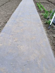 Phurba begins by laying down the weed cloth in the center of the garden. Twine is used ensuring the path is aligned properly all the way to the opposite end of the garden.