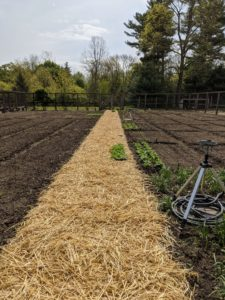 We still have lots of room to plant more in the coming weeks. I am already looking forward to the first harvest. What are you planting in your vegetable garden this season?