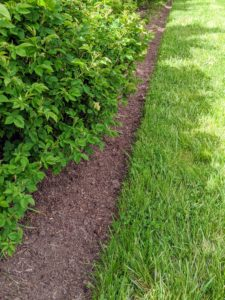 For maintenance, we always edge the beds and make sure they are dressed with good, nutrient-rich compost. When selecting a location for lilacs, choose one that has good air circulation to reduce the likelihood of fungal diseases, such as powdery mildew.