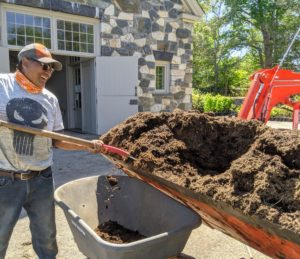 Pete shovels a good amount of mulch into the wheelbarrow to bring to the garden bed.