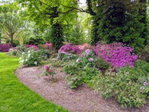 When planting tree peonies, choose a well-drained location, with four to six hours of direct sun or dappled sun and shade all day - a place protected from drying winds is also helpful.