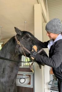 A horse's face should always be kept as clean as possible also. The face and nose are often moist, making it very easy for dirt and mucus to build up. Sarah brushes Sasa's face and then will follow up with a towel around more sensitive areas.