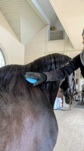 Then, Sara brushes Sasa's beautiful dark mane. She uses a mane and tail brush specially designed for easier brushing with fewer tangles and less hair breakage.
