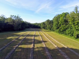 Here is a view from above taken with our drone - all the rows are perfectly straight. They will continue to dry out until they are baled.