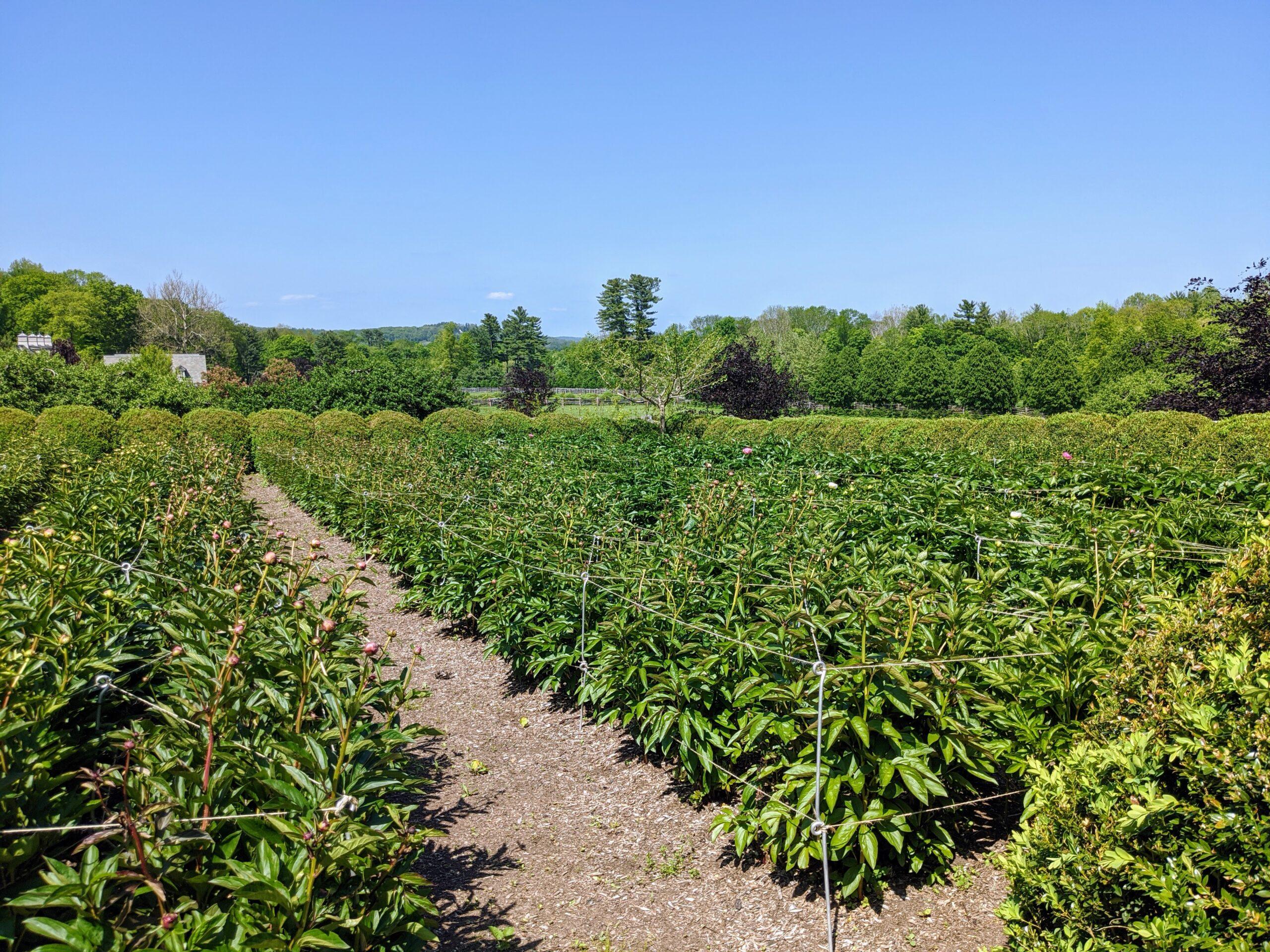 Herbaceous Crop Top