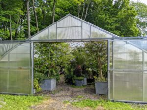 This is one of two plastic hoop houses where most of my tropical plants are stored during the cold weather. They actually spend about seven months of the year in these temperature-controlled shelters, but they definitely thrive.
