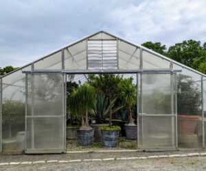 Next door to my Equipment Barn is another large hoop house where I store my citrus collection along with various other agaves and palms, etc.