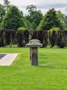 They are doing so well and are a great contrast to the bright green lawn. Columnar beech trees are fastigiate meaning their branches slope upward more or less parallel to the main stem.