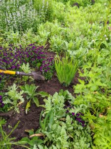 As with all plantings, tamp the soil around the base carefully to be sure there is good contact.