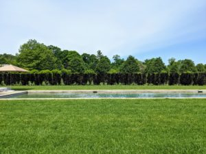 The pool is surrounded by about 170-trees along the inside fence line. These are purple columnar beech trees, Fagus sylvatica 'Dawyck Purple' which will grow to 40 to 50 feet in height and only 10-feet wide which makes them perfect for tight spaces and as an interesting hedge.