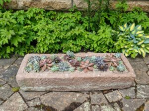 This ancient English stone trough is full of succulents. We also use the distinctive Mt. Desert pink gravel as a top dressing.