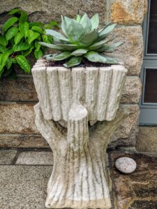 Another agave sits in this beautiful faux bois planter. This planter is extremely heavy – about four to five hundred pounds.