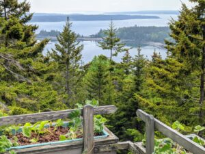 """This is a gorgeous view off of what I call """"Terrace 1"""" looking out over Seal Harbor with Sutton Island in the distance. In the planters, Mike and Wendy planted scented geraniums, Pelargoniums. Known for its aromatic foliage, pelargoniums are semi-woody, tender, and native to the Cape of Good Hope in South Africa."""