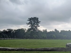 Even with dark, ominous clouds overhead, the great white pines stand majestically in the landscape. These white pine trees are visible from almost every location on this end of the farm. Pinus Strobus is a large pine native to eastern North America. Some white pines can live more than 400-years.