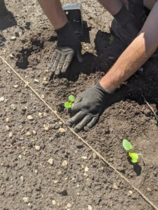 Yesterday, Ryan and I planted the okra, one of my favorite vegetables. Here, Ryan is using my Martha Stewart gloves in black. These breathable garden gloves feature nitrile-coated palms for a handy, nonslip grip and are available from my Amazon shop in black, mint, and slate.