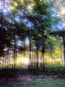 By 6:30am, the sun's glare could be seen through the trees in the woodland.