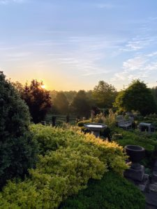 I captured this photo from my large terrace parterre with the sun rising over the treeline.