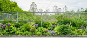 Outside the fence, Dr. Oratz took this panoramic view looking at the front of the flower garden.