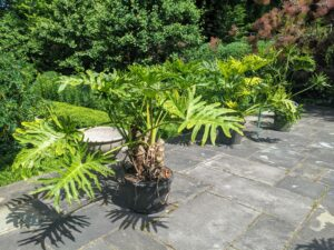 Not long ago, we planted the urns on the large terrace overlooking the garden. It is a great place to display tropical plants that do best in indirect sunlight and container plants are an easy way to dress up any terrace or patio.