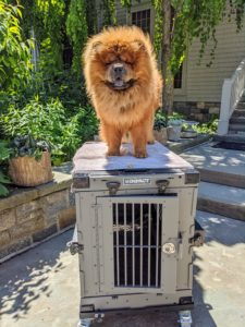 Here is my young and handsome Chow Chow, Emperor Han showing off his new Impact Dog Crate - made by Heater Craft Marine Products, Inc., a family-owned business located in the foothills of the Rocky Mountains in North Idaho.
