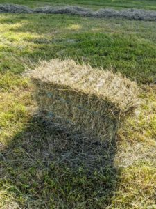 This bale accidentally fell out of the trailer and will be picked up on a later pass. Each bale is about 15 by 18 by 40 inches large. The number of flakes in the bale is determined by a setting in the baler. Many balers are set for 10 to 12 flakes per bale.