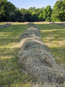 Here is a closeup of a windrow before it is picked up by the baler. Carlos starts this process midday when there is the least amount of moisture.
