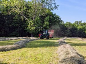 The tractor rides to one side of the windrow while the baler passes directly over it to collect the hay.
