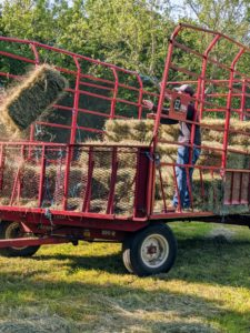 The bale is then propelled into the wagon by a mechanical arm called a thrower or a kicker. The bales are manageable for one person to handle, about 45 to 60 pounds each.