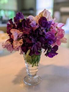For the longest vase life, pick sweet peas when there are at least two unopened flowers at the tip of a stem. Look how beautiful they are in this short clear glass vase.