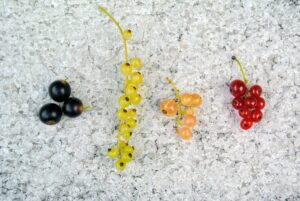 I grow black, white, pink, and red currants.