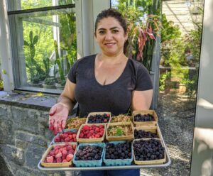 """Here is Enma with boxes of gorgeous pink currants and more sweet raspberries. When picking, be ready to get your hands a bit """"dirty""""."""