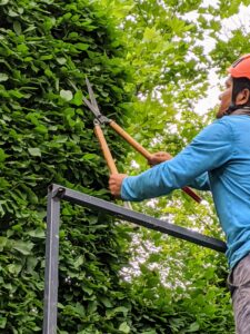 Here is Pasang working by hand on the upper sections from our trusted Hi-Lo. It is more time consuming to prune the hedge this way, but it is also more exact, and that's important when sculpting formal hedges.