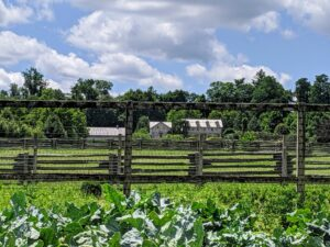 Here is a lovely view from my vegetable garden looking across the verdant paddocks toward my Winter House in the distance. I am so pleased with this year's growing season. How is your garden doing? Share your comments below. I would love to hear fro you.