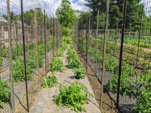 And here is another row - all ready for the growing vines. I am looking forward to a wonderful harvest this season.