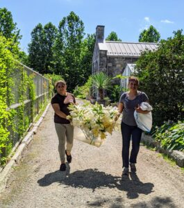Enma and Elvira carefully carry the bin of lilies to the Winter House for arranging.