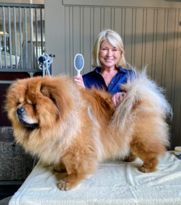 Here is another blow out by Megan done before this Amazon LIVE pets show. This was another very full day. I do many different shoots in one day so it is important that my hair looks its best for as many hours as possible. My dear Empress Qin's coat looks pretty also, after a good grooming.