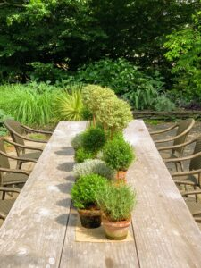 On this long table for 12 on the west dining terrace, Dennis and Bill arranged a variety of topiaries - rosemary, myrtle, and variegated myrtle.