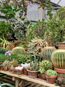 This table displays just part of the succulent collection. I love succulents and also have an expansive collection in my greenhouse - one can never have too many interesting succulents.