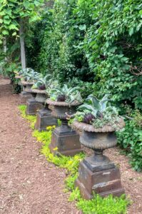 These rustic urns are planted with agave and echeveria.