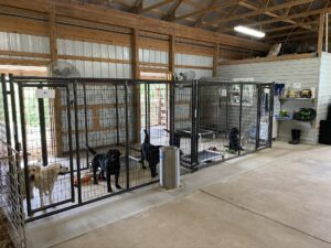 Here is a better picture of the kennel. I built my kennel inside my family's livestock barn. My kennel is 315 square feet - I wanted it to be as roomy as possible. Safari and Goodie are posing here for the picture.