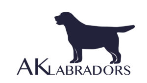 Nine years later, here is my logo for AK Labradors. My mother, Susan, Martha, and I all added input into the design. The dog in the logo was inspired by a picture of Safari I took at the American Kennel Club National Series in Orlando, Florida in 2019.
