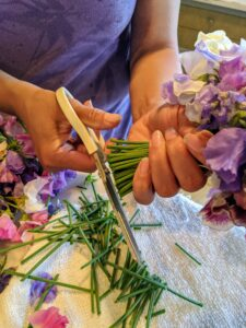 After selecting a good amount of flowers, Elvira cuts the stems leaving them about six to eight inches long.