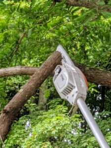 For larger tree branches Pasang makes two cuts to safely remove the limb without stripping any bark. The first cut should be about a third to halfway down the branch.