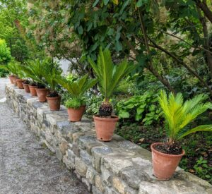 I love how they all look evenly spaced along this wall. How are your container plants doing this season? Share your comments with me below.