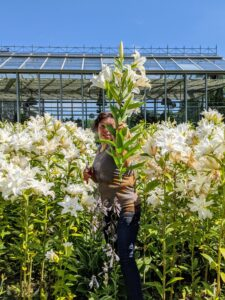 My housekeeper, Elvira, carefully walks through the lily bed to cut flowers from the back, so that the garden still looks pretty from the front. When selecting flowers, always consider appearance as well as condition.