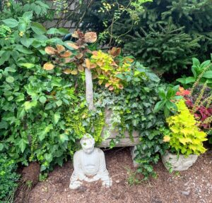 Across from Laura's garden is an antique cement basket with a Buddha Jim purchased some time ago. He placed it here to watch over the gardens. The basket is filled with coleus, creeping Jenny, and ivy.