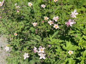 These are the tiny pink flowers along the path leading up to the flower garden.